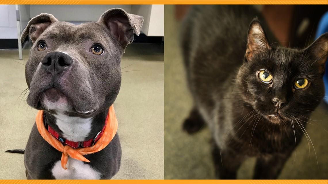 Adopt-A-Pet: Meet Shadow and Daisy Duke!