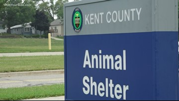 Kent County Animal Shelter waiving fees on adoptable pets