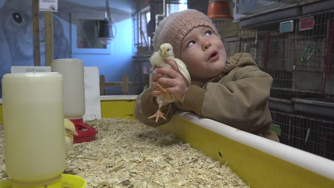 Spring means baby farm animals, but a West Michigan farm says skip buying chicks, ducklings for Easter