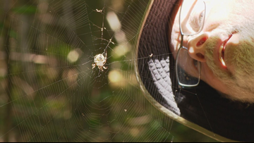 SPIDER MAN: Love of arachnids lands bizarre hobby on the 'web'