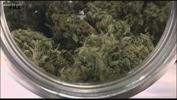 Study recommends no threshold for determining marijuana in drivers' bloodstream