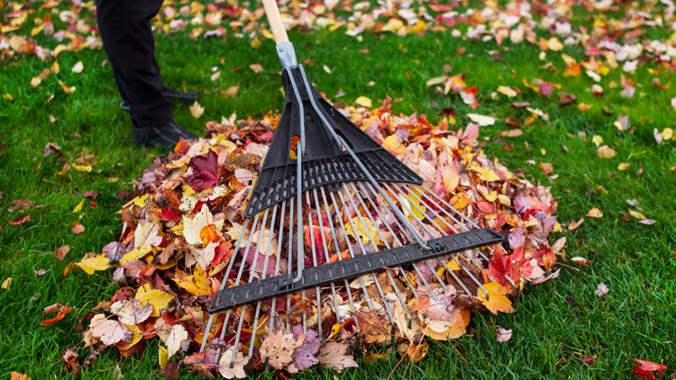 Clearing your yard before winter? Here's where residents can take their leaves in GR