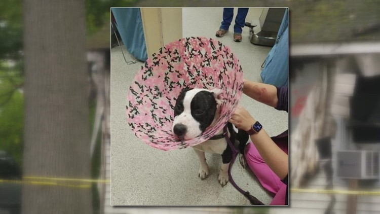 Muskegon Heights dog recovering after being shot and fleeing burning home