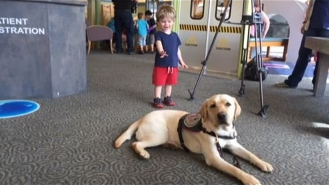 It's Pawsitively fun! New Paws With A Cause exhibit opens at GRCM