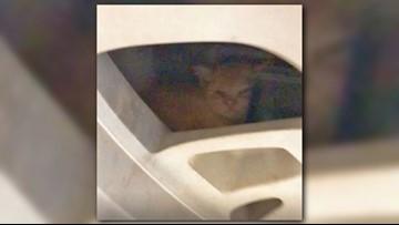 Dealership finds stowaway kitten on spare tire
