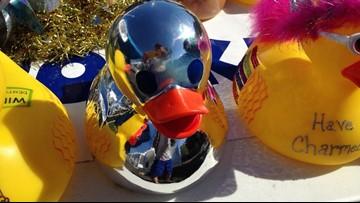 Ducks on Display: Rockford businesses showcasing ducks for Start of Summer Celebration