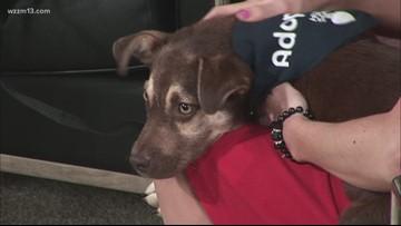 Adopt-a-Pet: Meet Early