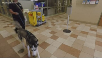 Animal control picks up pets running from fireworks