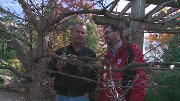 Get snipping this winter for pruning perfection