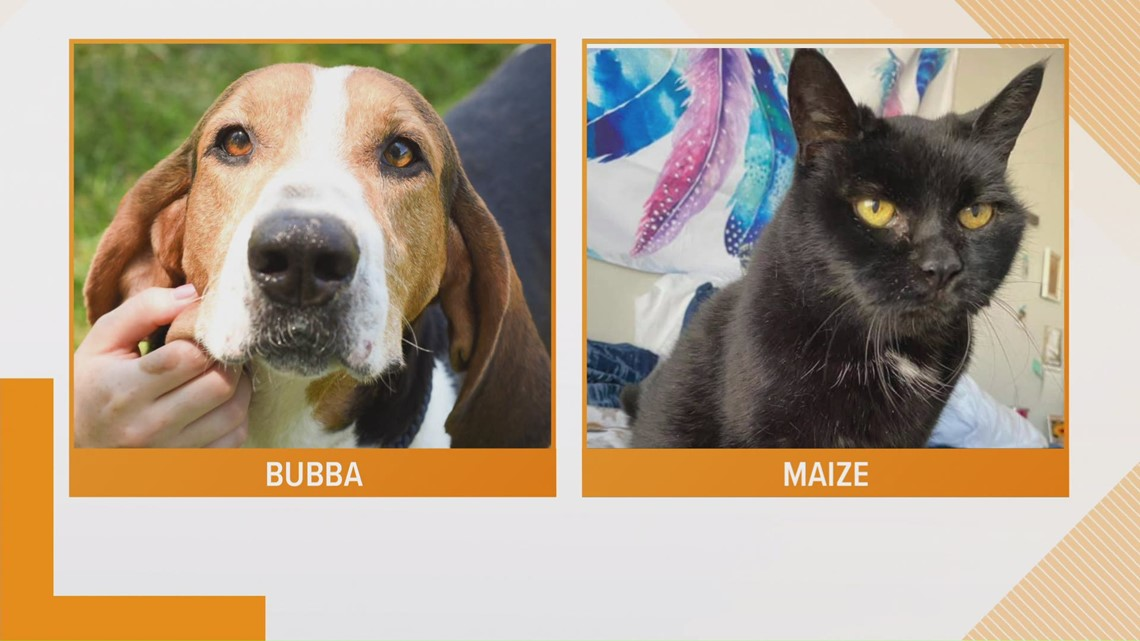 Adopt-A-Pet: Meet Bubba!