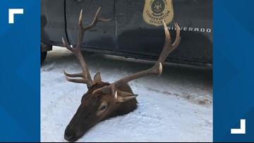 DNR looking for tips after elk is poached near Gaylord