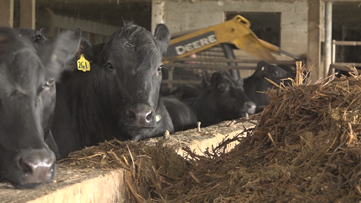 'Large, small, we're all hit'   West Michigan farmers face heartbreak as COVID-19 slams the industry