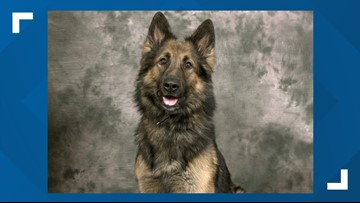 The Berrien County Sheriff's Department mourns the loss of Nero the K9