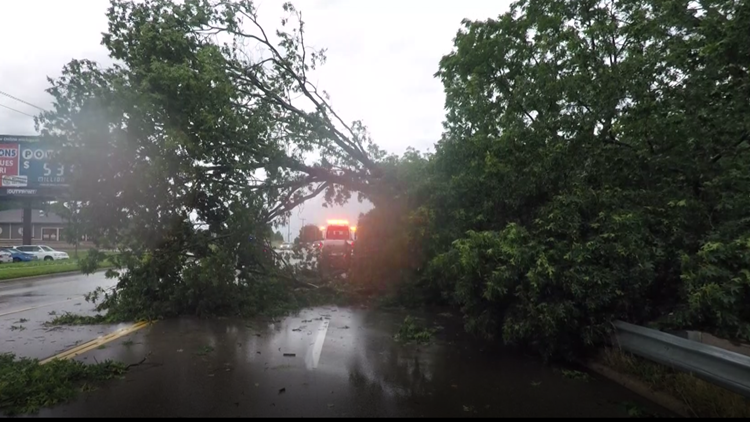 Tree covering 28th street