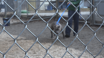 Bill aims to protect dogs from extreme temperatures