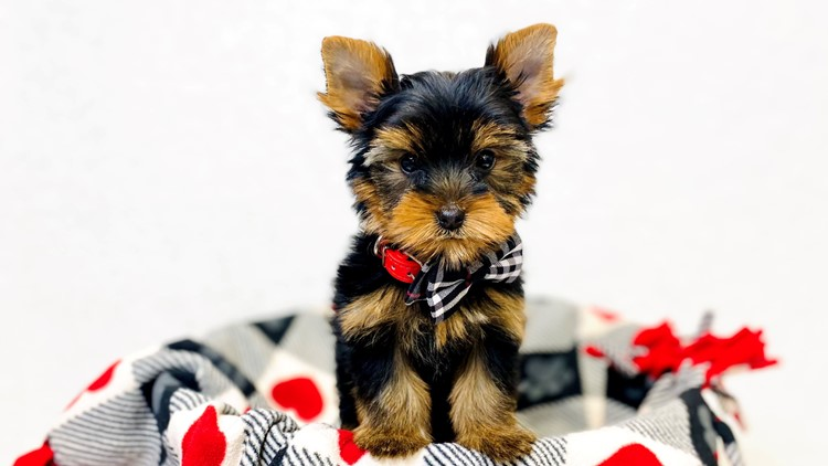 The Barking Boutique offers reward money for the safe return of stolen puppy