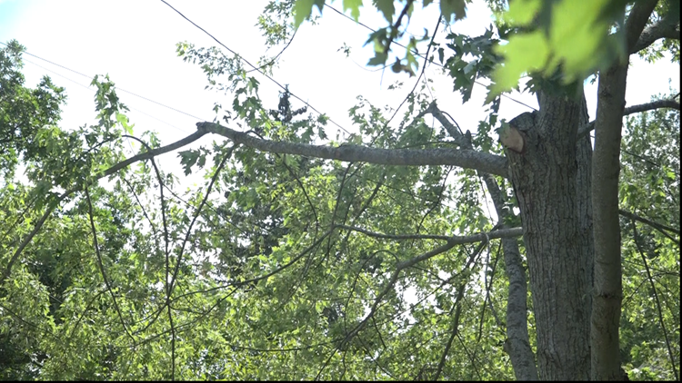 Tree Consumers Energy