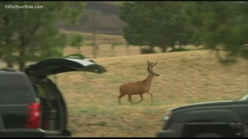 Opening Day is here: Watch for deer on the roads