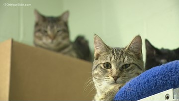 Local shop helping with animals during shelter renovation