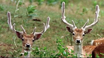 Michigan Senate changes, OKs bill to lift deer-baiting ban