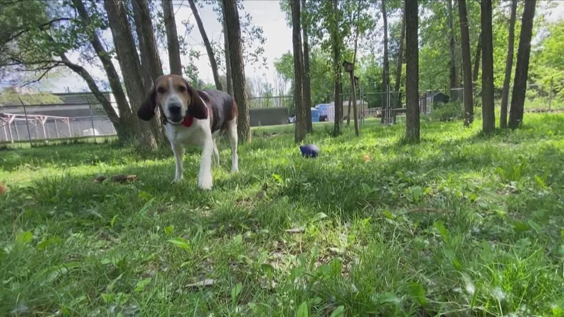 Adopt-A-Pet: Meet Bubba and Luna