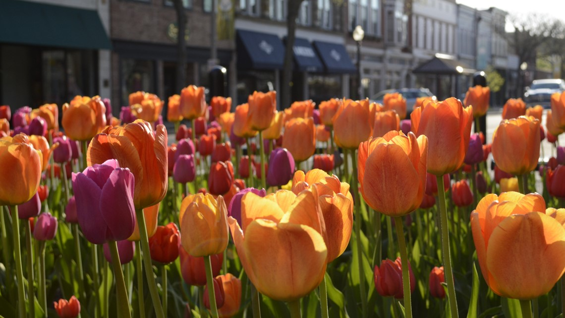 Registration for 2020 Tulip Time Run now open