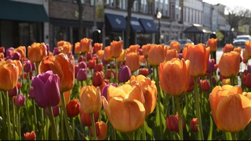 Tulip Time recognized as 'destination worth traveling for'