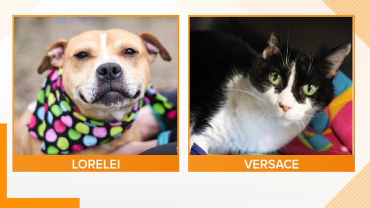 Adopt-A-Pet: Meet Lorelei & Versace!