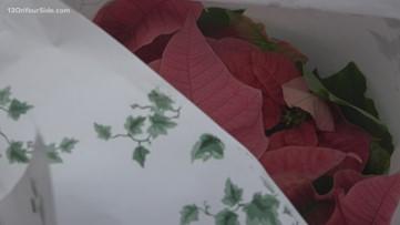 Greenthumb: The Humble Holiday Poinsettia