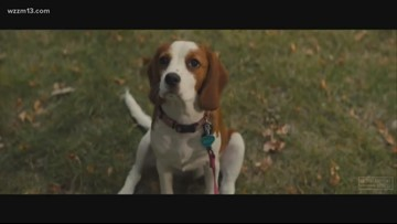Box Office Mom: Bring tissue to 'A Dog's Journey'