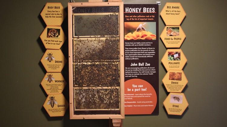 honey bee hive at john ball zoo