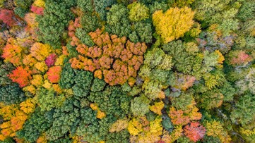 Greenthumb: Fall is in the air and colors are on the trees