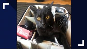 Visit adoptable cats at unique location