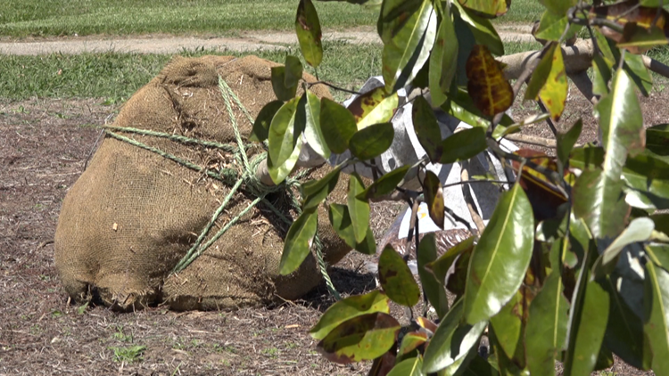 Tree planting event helping Grand Rapids get closer to urban canopy goals