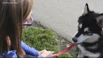 Proposed bill would ban pet leasing in Michigan