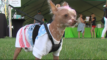Pets dressed as rock stars bring the show at shelter fundraiser