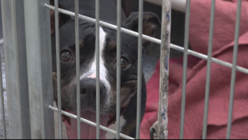 'We don't want to say no' | Ottawa Co. shelter takes in Dorian dogs despite full load